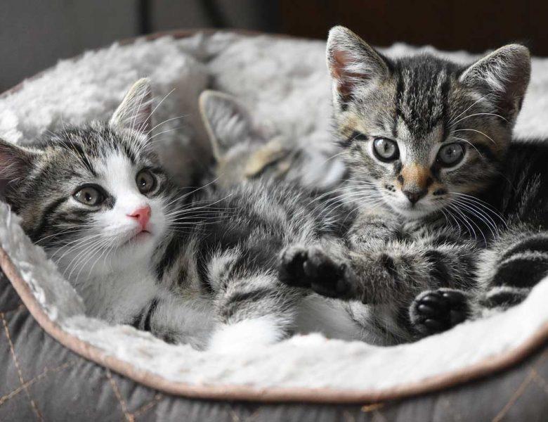 İndirimli Kedi Mamaları